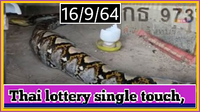 Thai lottery touch sure single win 16-09-21 Don't Miss Hot Cut Digit
